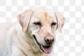 Sporting Group Nose - Dog Labrador Retriever Retriever Nose Sporting Group PNG