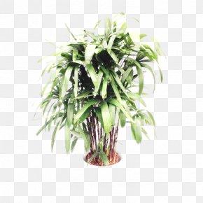 Tree - Tree Arecaceae Areca Palm Plant Stem PNG