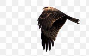 Eagle's Feathers - Eagle Hawk Falcon PNG
