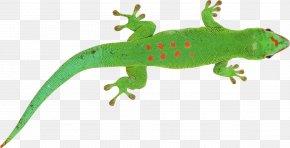 Lizard - Lizard Chameleons Clip Art PNG