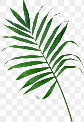 Leaf - Frond Arecaceae Palm Branch Leaf Clip Art PNG