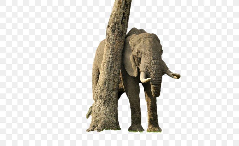 Desktop Wallpaper Elephantidae African Elephant Png