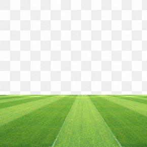 Football Field - Football Pitch Grassland Stadium PNG