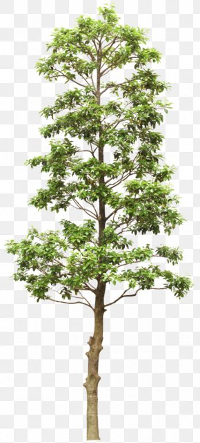 Trees - Out-Tree Branch PNG