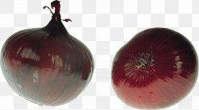 Onion Image - Onion Vegetable Piyaz PNG