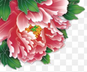 Peony - Japanese Camellia Floral Design Carnation Peony Petal PNG