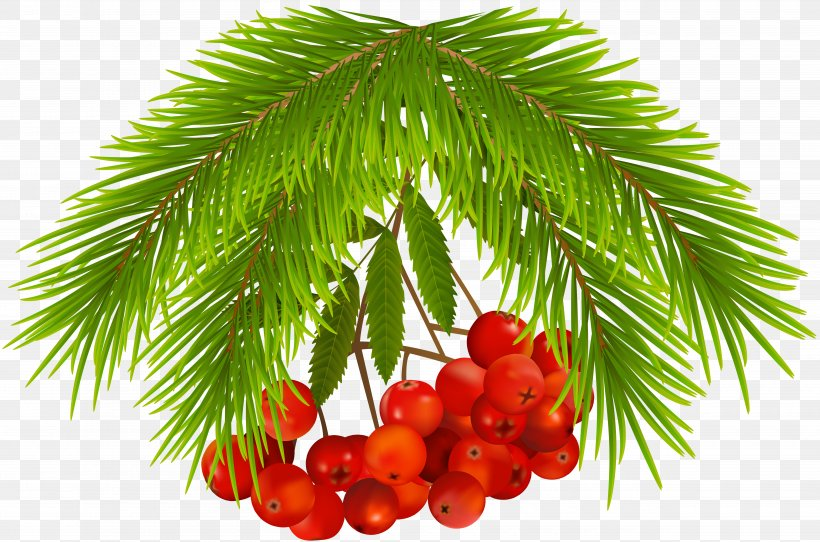 Tree Christmas Day Fruit Image Food, PNG, 5000x3309px, Tree, Arecales, Berries, Berry, Christmas Day Download Free