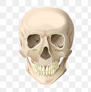 Cranial Skeleton Head Vector Terrorist - Skull Skeleton Head Bone PNG