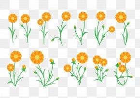 Plant - Calendula Officinalis Plant Cut Flowers PNG