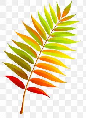 Autumn Leaves - Autumn Leaves Clip Art Leaf PNG