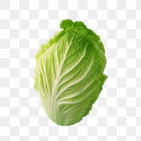 Cabbage Pictures - Napa Cabbage Bok Choy Chinese Cabbage Cauliflower PNG