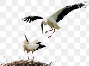 Birds Animals Stork - Bird White Stork Icon PNG