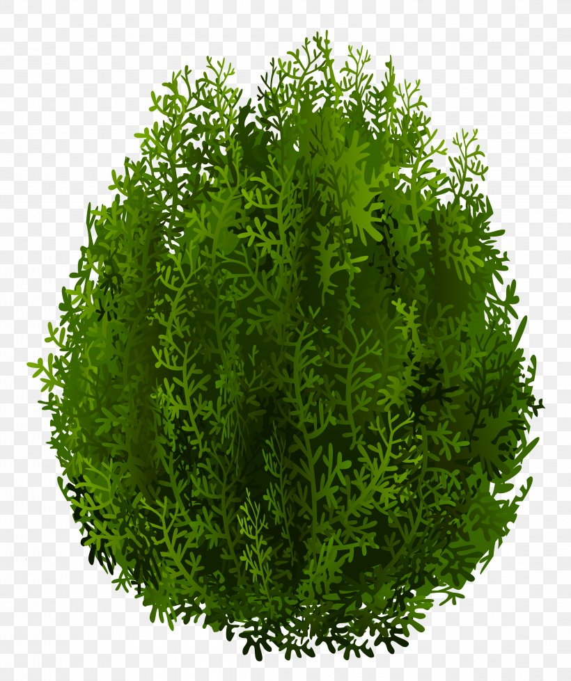 Desktop Wallpaper Image Resolution, PNG, 4587x5480px, Image Resolution, Dots Per Inch, Evergreen, Grass, Herb Download Free