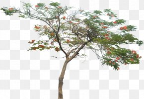 Watercolor Plant - Tree Royal Poinciana Plant PNG