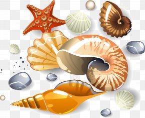Vector Conch - Seashell Euclidean Vector Download Clip Art PNG