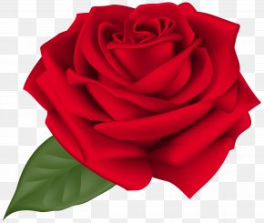 Red Rose - Rose Flower Clip Art PNG