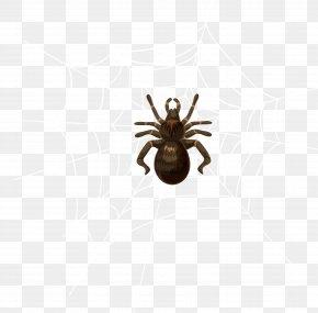 Spider - Spider Insect Invertebrate Pest Arthropod PNG