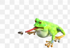 Insect - Insect Frog Animal Bee Image PNG