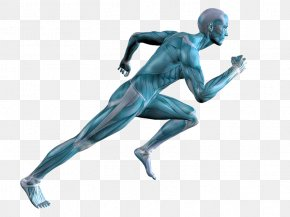 Running Human Body Muscle Adipose Tissue Calf Pain PNG