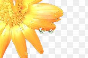 Calendula English Marigold - Flowers Background PNG