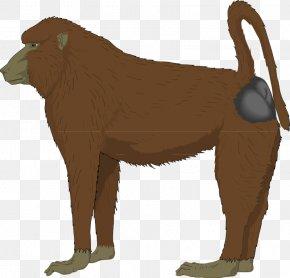 Mandrill Hamadryas Baboon Clip Art PNG