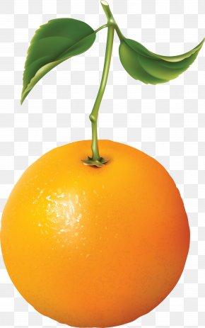Orange Image Download - Orange Juice Tangerine PNG
