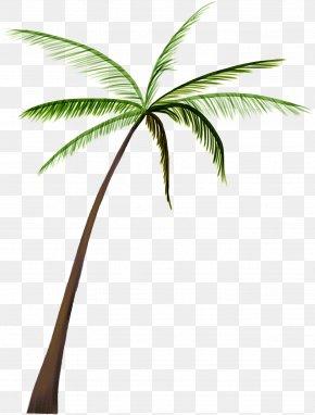 Coconut Tree - Arecaceae Nata De Coco Coconut Tree PNG