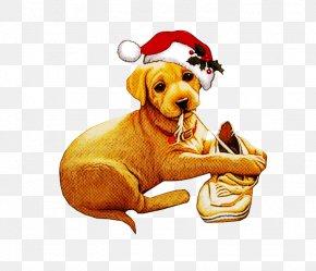 Dog Breed Puppy - Dog Golden Retriever Sporting Group Vizsla Labrador Retriever PNG