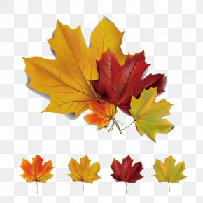 5 Beautiful Autumn Maple Leaves Vector Material - Autumn Leaves Maple Leaf Euclidean Vector PNG