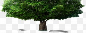 Tree - Tree Computer File PNG