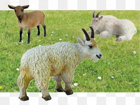 Goat - Mountain Goat Sheep Cattle Pasture PNG