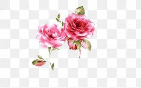 Pink Rose - Rosa Chinensis Poster Pink PNG