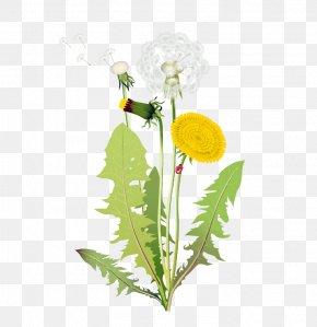 Piaoye Dandelion - Flower Euclidean Vector Clip Art PNG