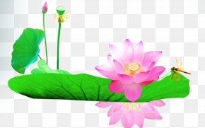 Lotus Leaf Lotus - Leaf Download Computer File PNG