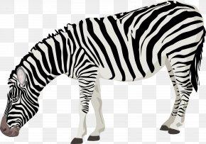 Zebra Photos - Zebra Clip Art PNG