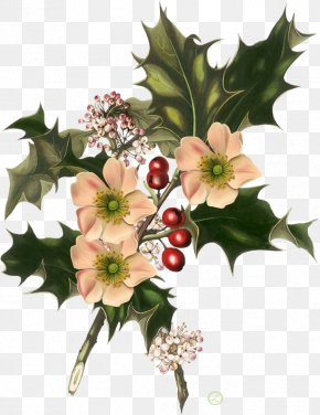 Christmas - Wild Flowers Christmas Common Holly American Holly PNG