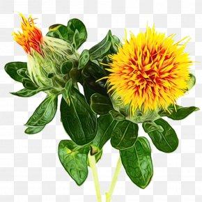 Perennial Plant Herbaceous Plant - Flower Plant Safflower Distaff Thistles Herbaceous Plant PNG