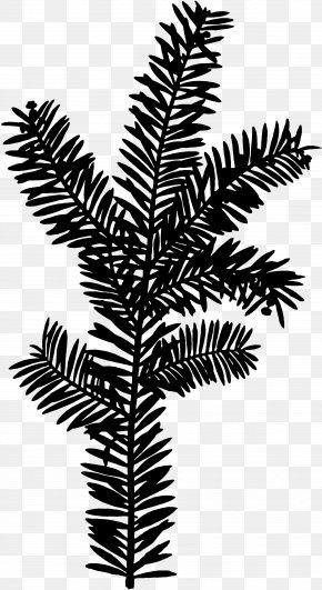 M Plant Stem Leaf Palm Trees - Twig Black & White PNG