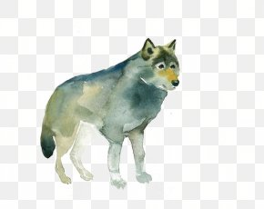 Wolf - Gray Wolf Red Fox Watercolor Painting Drawing PNG