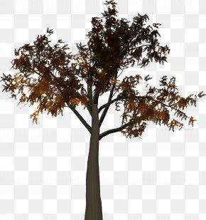 Tree Branch - Tree Branch Leaf PNG