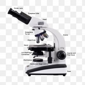 Stereoscopic - Optical Microscope Digital Microscope Scanning Electron Microscope PNG