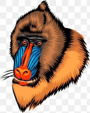 Gorilla - Ape Mandrill Primate Baboons Gorilla PNG