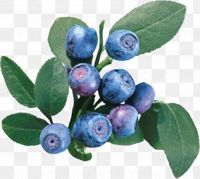 Blueberries - European Blueberry Bilberry Vaccinium Uliginosum Raster Graphics PNG