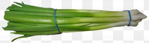 Scallion Green Onion - Scallion Onion Vegetable PNG