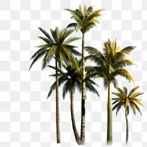 Summer Trip Flower Palm Tree - Coconut Palm Trees Asian Palmyra Palm Clip Art PNG