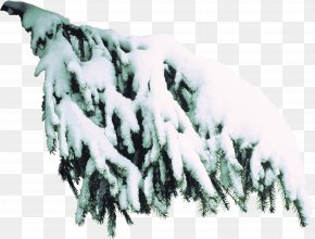 Tree - Spruce Tree Branch Clip Art PNG