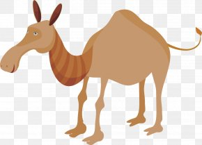 Camel - Dromedary Horse Pack Animal Fauna Wildlife PNG