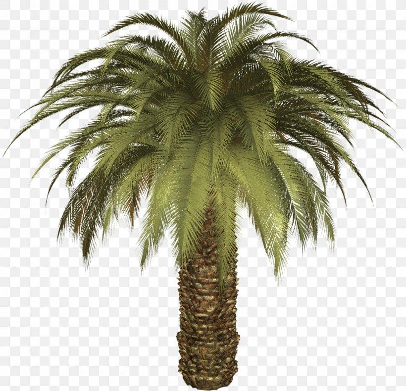 Arecaceae Date Palm Phoenix Canariensis Tree, PNG, 1600x1542px, Arecaceae, Areca Palm, Arecales, Asian Palmyra Palm, Attalea Speciosa Download Free