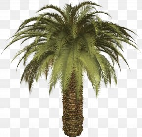 Palm Tree - Arecaceae Date Palm Phoenix Canariensis Tree PNG