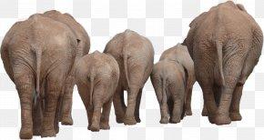 Elephant - Asian Elephant Computer File PNG